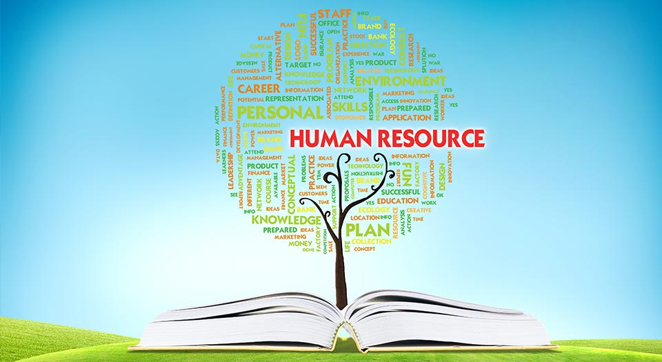 hr evolving role in organisation As hr evolved as a domain, the hr investment scale suggests that the more complex the strategies, the more strategic the role in an organization let's try to glance at the various roles and responsibilities within the hr department.